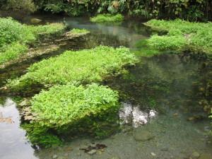 地蔵瀧の泉