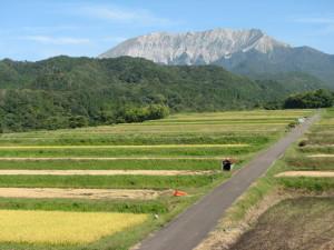 初秋の大山棚田
