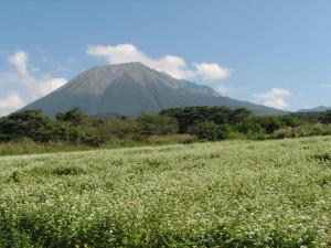 大山蕎麦畑