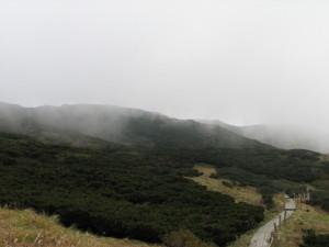 ダイセンキャラボク純林