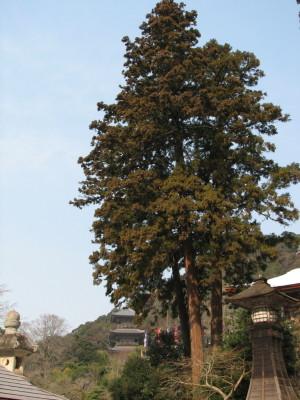千年杉と三重の塔