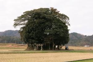ブロッコリー神社