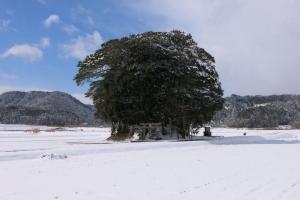 雪のブロッコリー神社