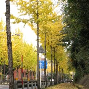 黄落の街路樹