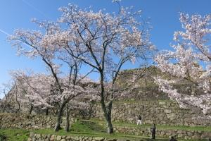 米子城の桜