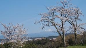 桜と城と大山と