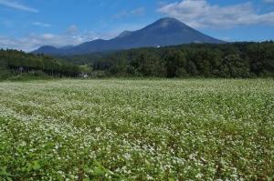 大山山麓蕎麦の花