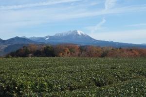 壺瓶山 茶畑